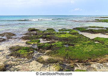 Algae on the sea, Boavista - Cape Verde, Cabo Verde