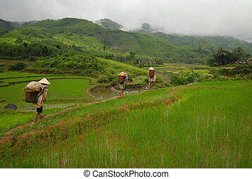 Rice paddy - Workers returning after a rainstorm