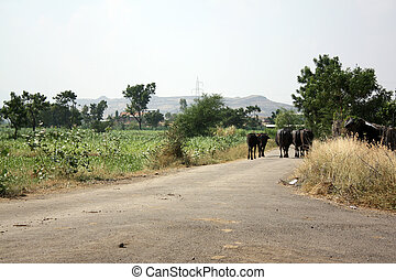 Indian Village Road - A view of a road in an Indian village...