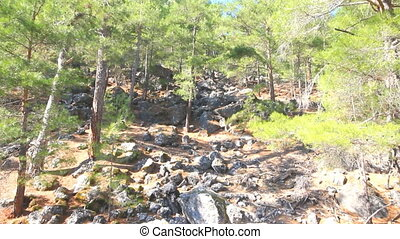 wild natural hillside and pine forest - Mediterranean...