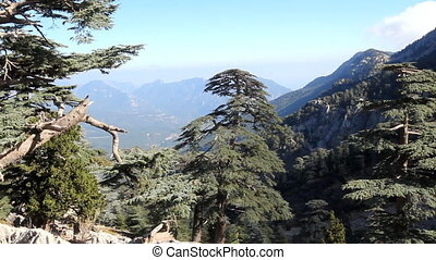 soothing mountain summer wonderful view - highland pine...