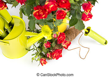 Gardening roses with watering can tools