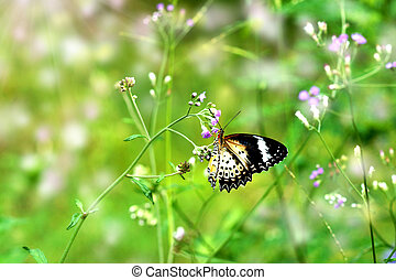 butterfly and flower grass