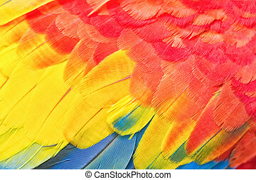 Colorful Macaw Feather