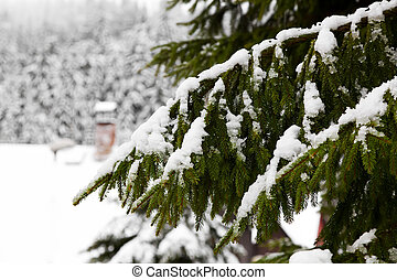 Snow-covered tree branch  - Snow-covered tree branch