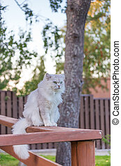 Cat outdoors - Pretty grey cat outdoors sitting summer time