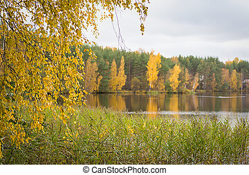fall autumn lake in the forest