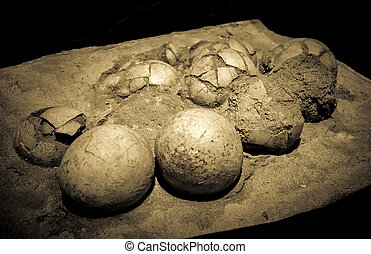 Dinosaur eggs in the nest - Hadrosaurus