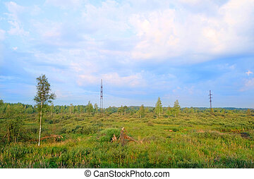 boggy forest  - remnants of the forest in the swamp