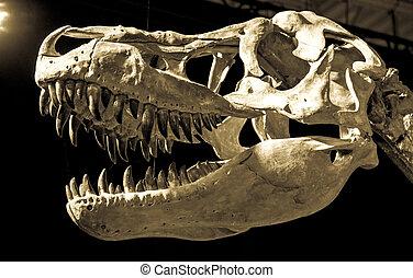 Dinosaur skull - Taubosaurus Bataar