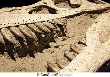 Dinosaurio, fósil, -, Tyrannosaurus, Rex,