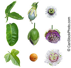 Passiflora Passion Collection - Collection of passiflora...