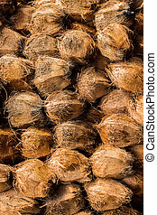 Coconuts which taking out coconut cover. - Group of Coconuts...
