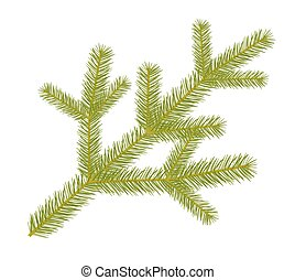 Spruce twig.