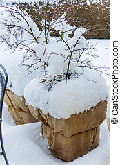 snow flower pots in the garden, symbolic photo for winter...