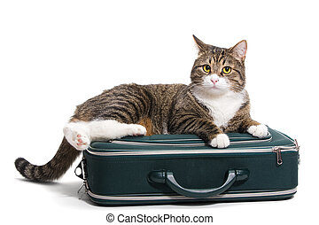 Cat in a suitcase - Grey cat sitting in a green suitcase,...