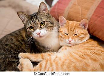 Friendship of the two cats - Friendship of the two striped...