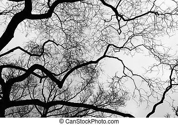 Tree - Black and white tree