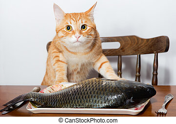 Orange cat and a big fish - Orang cat and a big fish on a...