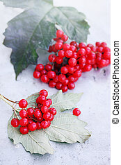 viburnum - branch of ripe viburnum with leaves on a table
