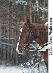 Horse in the winter in the wood