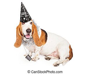 New Years Basset Hound Dog - A fun Basset Hound dog wearing...