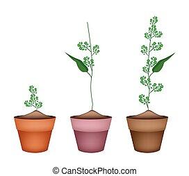 Flower and Leaves of Neem in Ceramic Flower Pots - Vegetable...