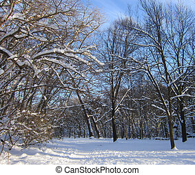 Winter Wonderland Scenery - Photograph