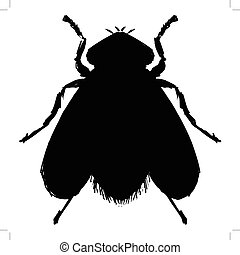 ordinary fly - black silhouette of ordinary fly