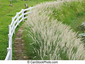 pathway in meadow with white fence