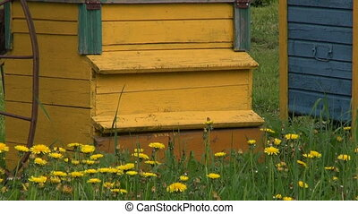 colorful wooden beehive group in old farm garden
