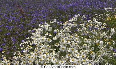 beautiful wild flowers on field