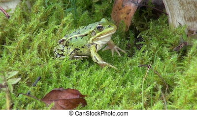 green frog on moss and mushroom