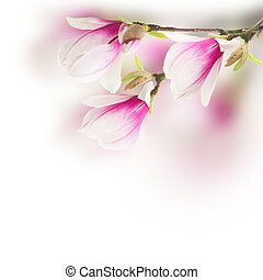 pink magnolia tree Flowers - Fresh pink magnolia tree...