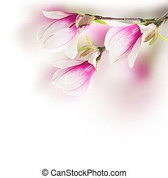 pink magnolia tree Flowers - Fresh pink magnolia tree...