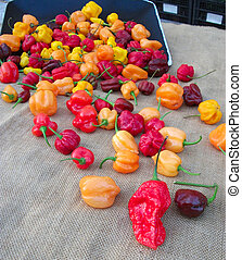 litte peppers - small colored peppers on a sackcloth