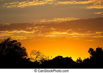 Sunset in pantanal with black skyline and orange sky - High...