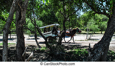 Horse cart in Gili Trawangan