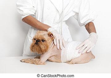 állatorvos, kutya, Orvos