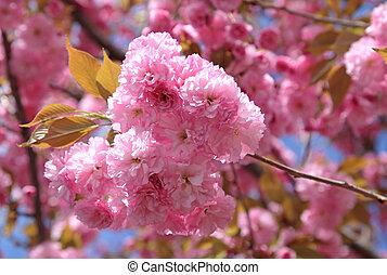 Spring - flowering tree