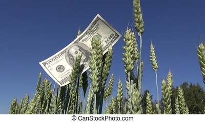 agriculture business money concept on farm field USA usd...