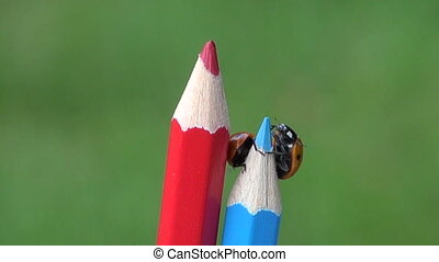 lucky ladybird ladybug on pencil - two beautiful insect luck...