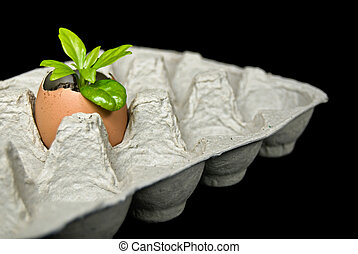 Egg Plant - New seedling growing in an eggshell.