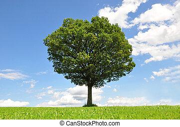 孤獨, 樹