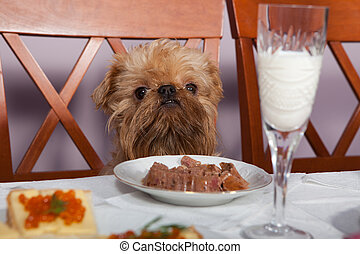Restaurant for dog - The dog is sitting at the table in...