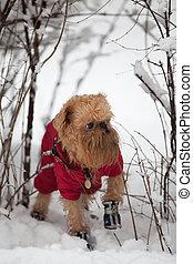Tél, kutya, jár