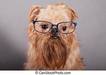 kutya, szemüveg