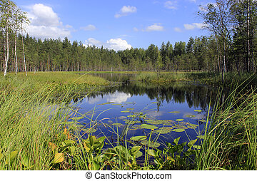 Forest lake in the North of Russia