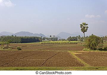 South-Indian landscape - Rural landscape of South-Indian...