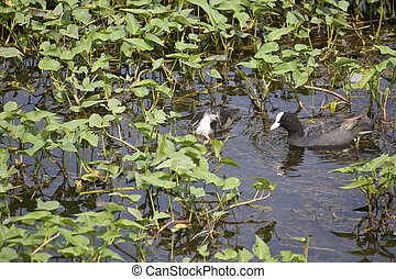 Indian waterbirds - Waterbirds close to the shore of the...